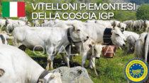 Vitelloni Piemontesi della Coscia IGP - Italia