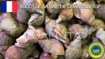 Bulot de la Baie de Granville IGP - Francia