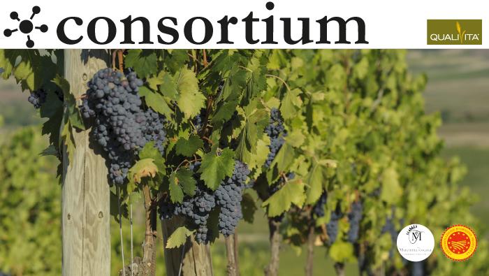 Maremma DOP simbolo di una Toscana del vino alternativa