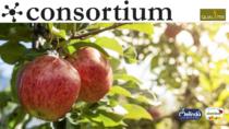 Le mele italiane leader del settore ortofrutticolo DOP IGP europeo