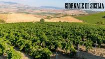Salaparuta DOP: aumenta la produzione del vino