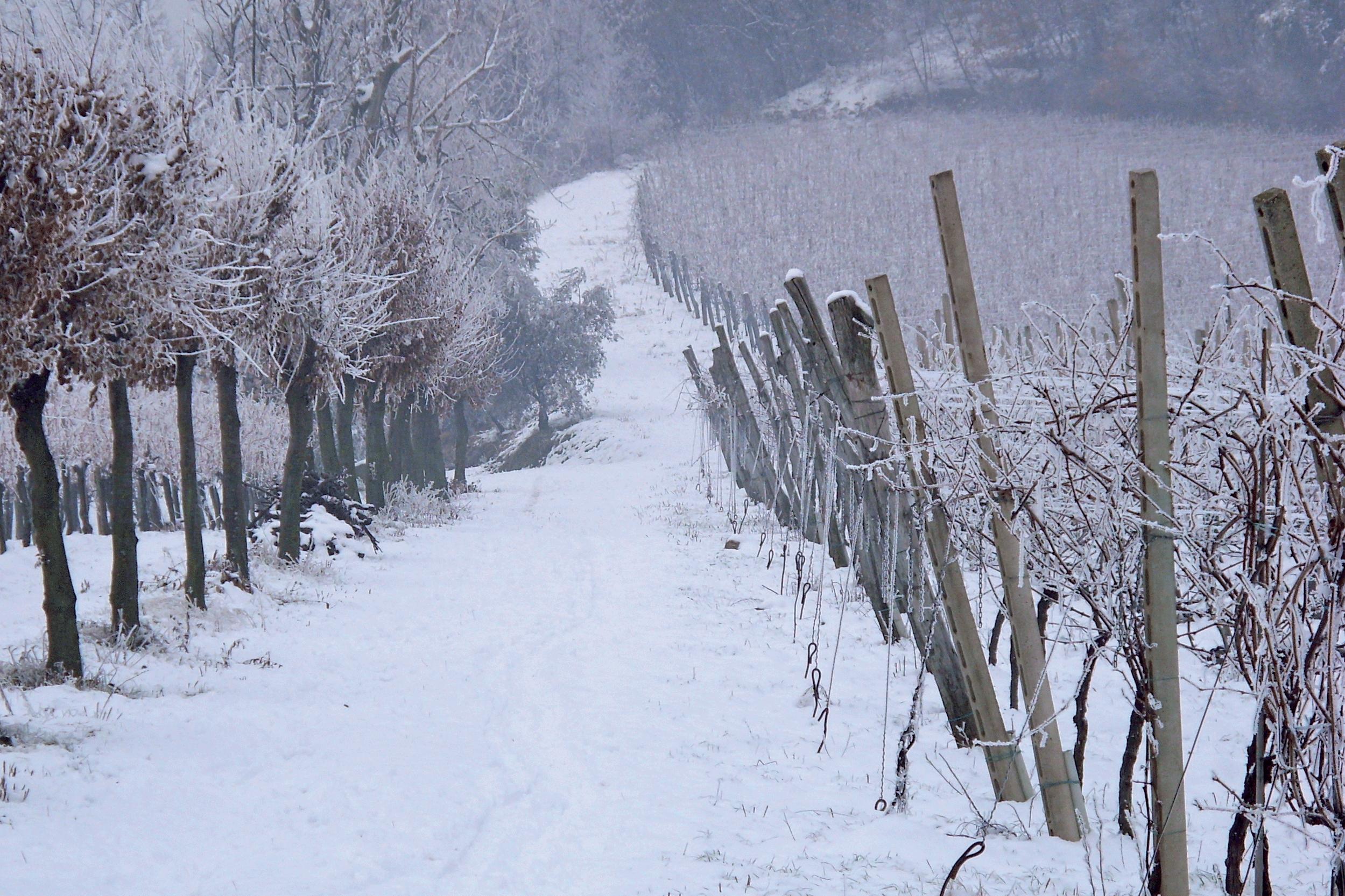 Abruzzo DOP foto-1