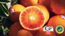 Consorzio Arancia Rossa di Sicilia IGP, formazione e laboratori sensoriali agli studenti