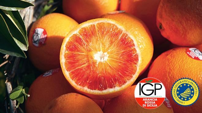 Arancia Rossa di Sicilia IGP: Tremila piantine di agrumi danneggiate