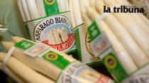 Veneto, gli Asparagi IGP restano nel campo: urgenza manodopera