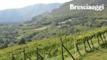 Consorzio Botticino DOP: promozione e turismo territoriale per lo sviluppo di una DO di nicchia