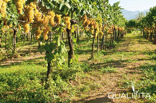 Bianco Capena DOP foto-1