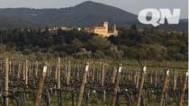 Consorzio Bolgheri chiede alla Regione 190 ettari di nuova superficie DOC