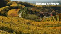 Certificazione per il vino del Triveneto
