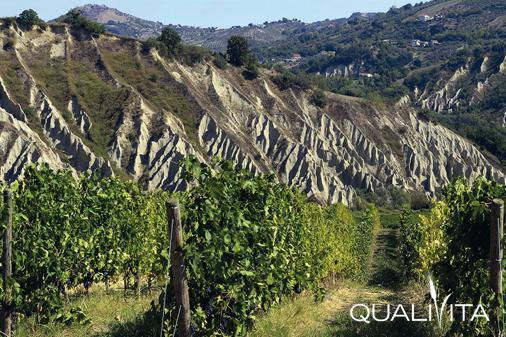 Cerasuolo d'Abruzzo DOP foto-1