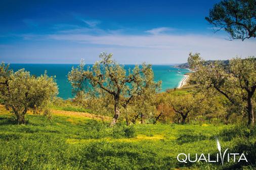 Colline Teatine DOP – Olio EVO foto-1
