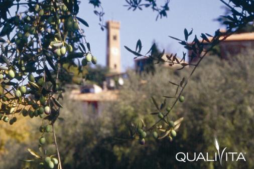 Colline di Romagna DOP – Olio EVO foto-1