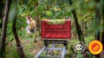 Sostenibilità, Conegliano Valdobbiadene Prosecco-Superiore DOP: giornata dimostrativa sugli impianti fissi per la difesa del vigneto