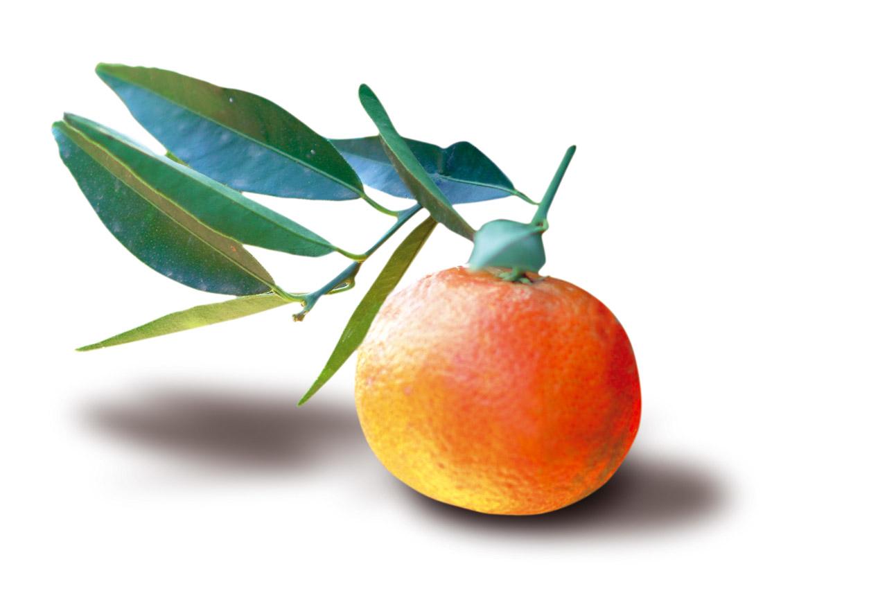 Clementine di Calabria IGP foto-12