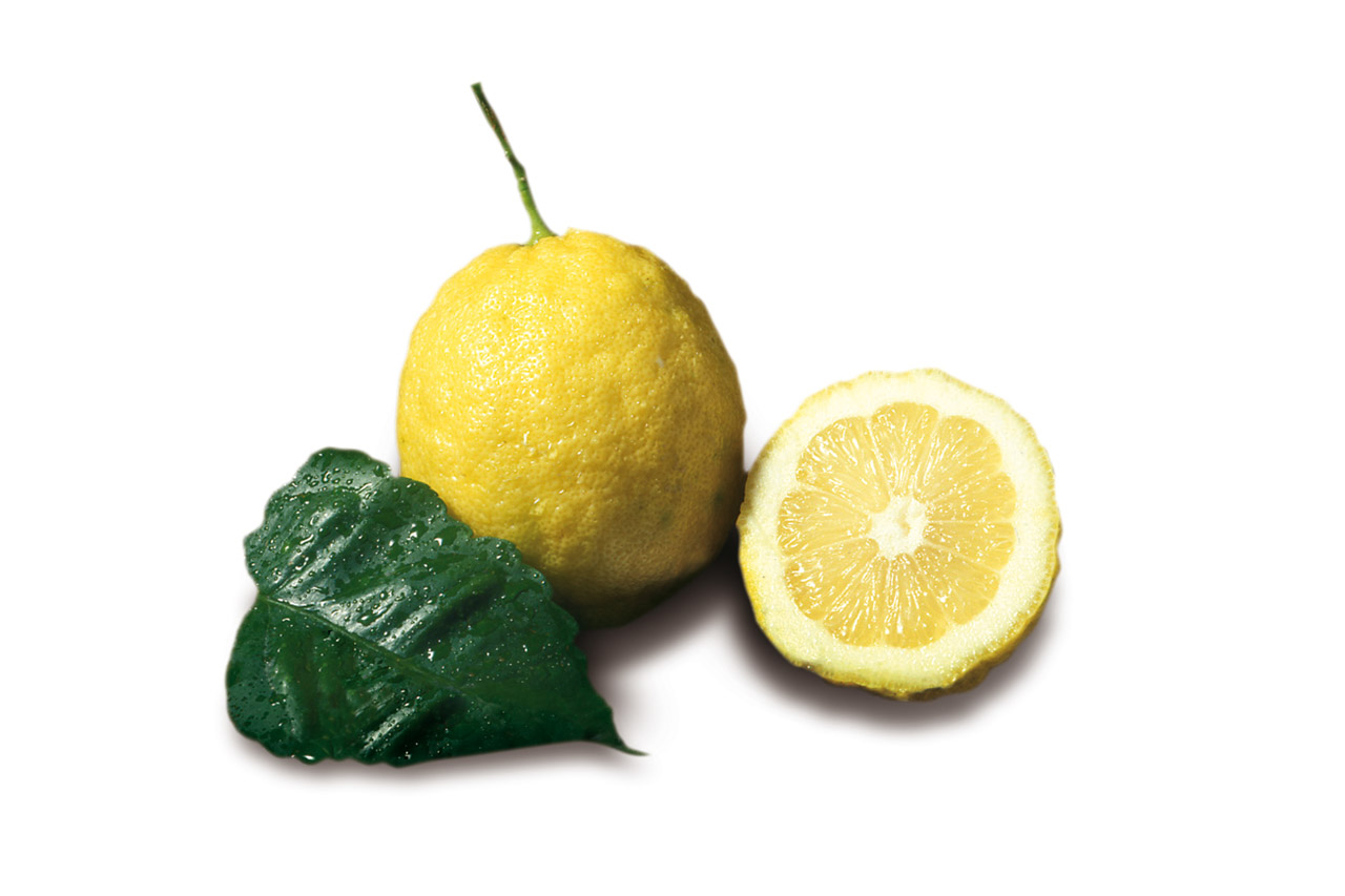 Limone Costa d'Amalfi IGP foto-18