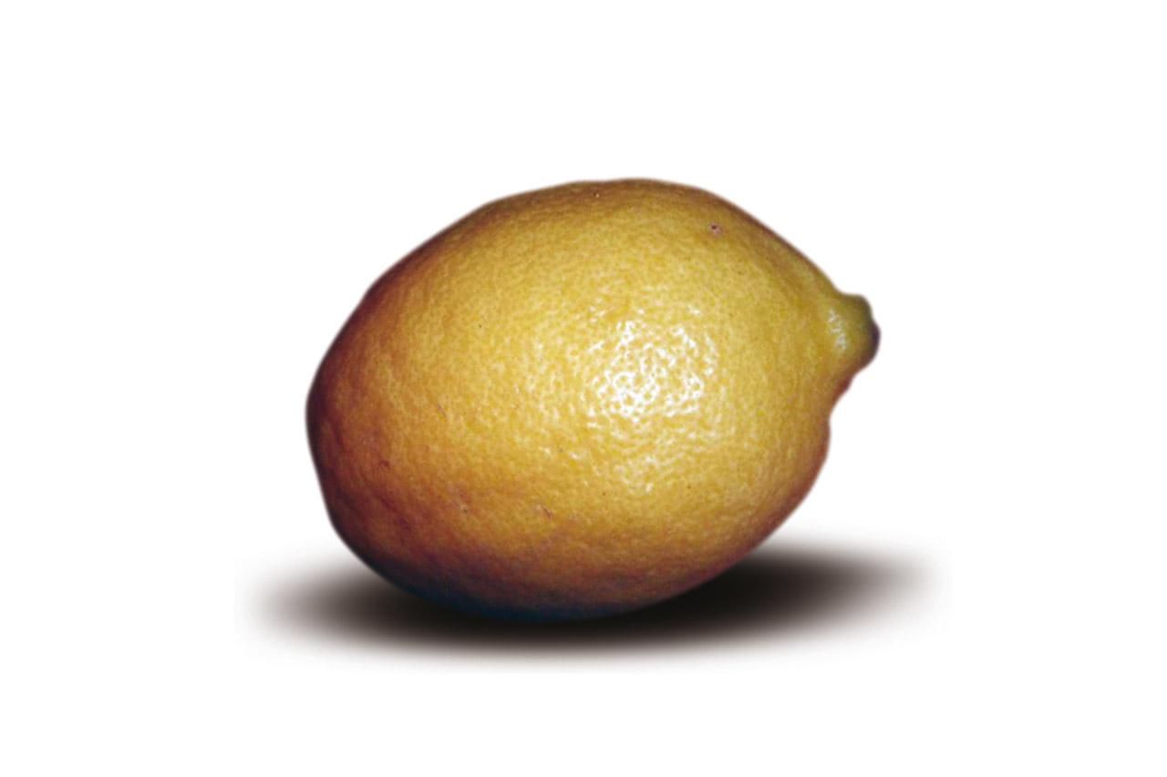 Limone Femminello del Gargano IGP foto-7