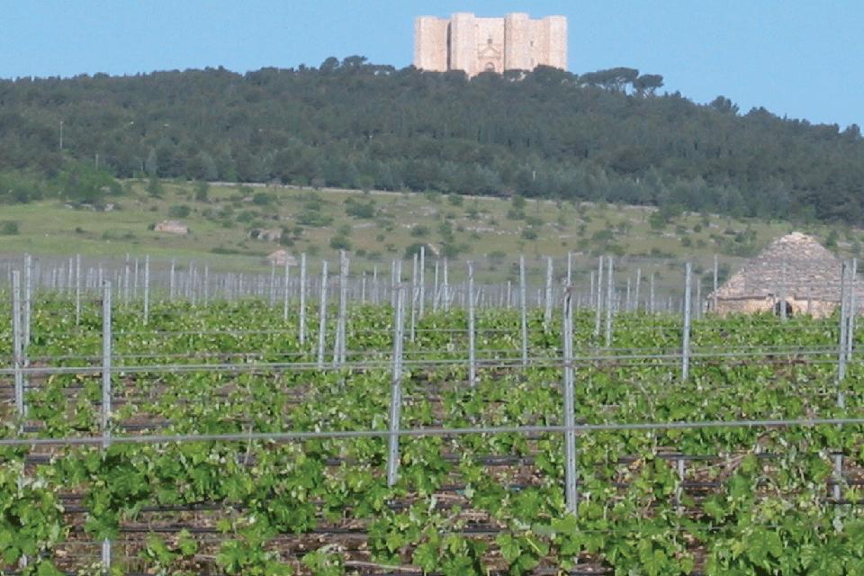 Castel del Monte Rosso Riserva DOP foto-1