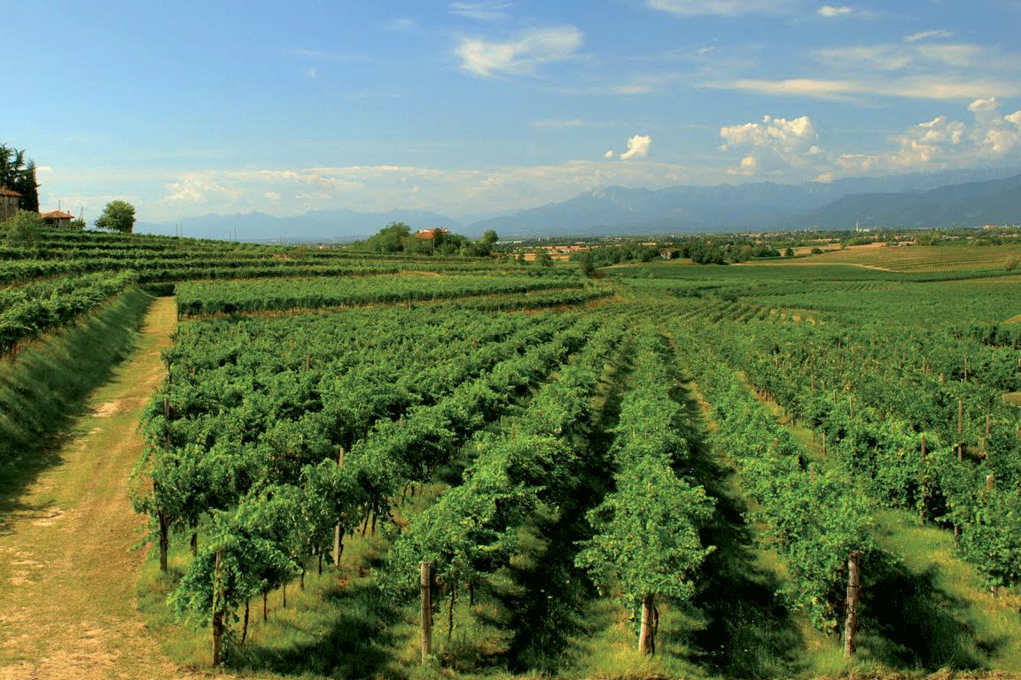 Colli Orientali del Friuli Picolit DOP foto-1