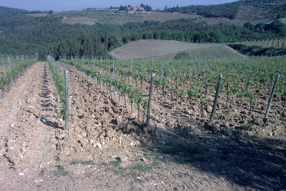 Colli della Toscana centrale IGP foto-1