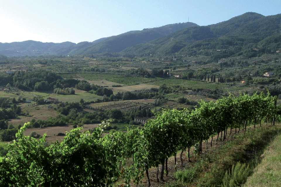 Colline Lucchesi DOP foto-1
