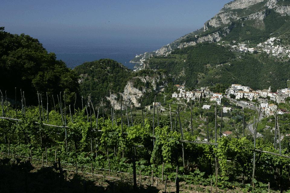 Costa d'Amalfi DOP foto-1