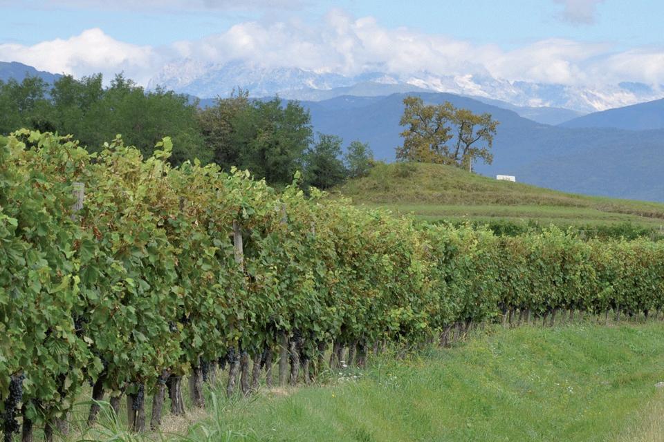 Friuli Latisana DOP foto-1