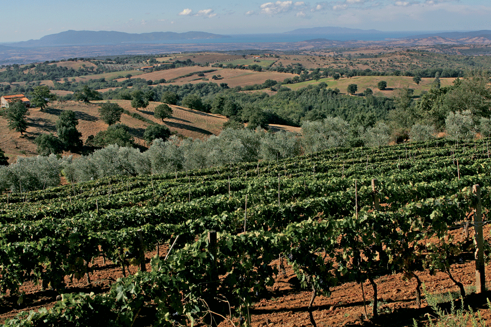 Maremma Toscana DOP foto-1