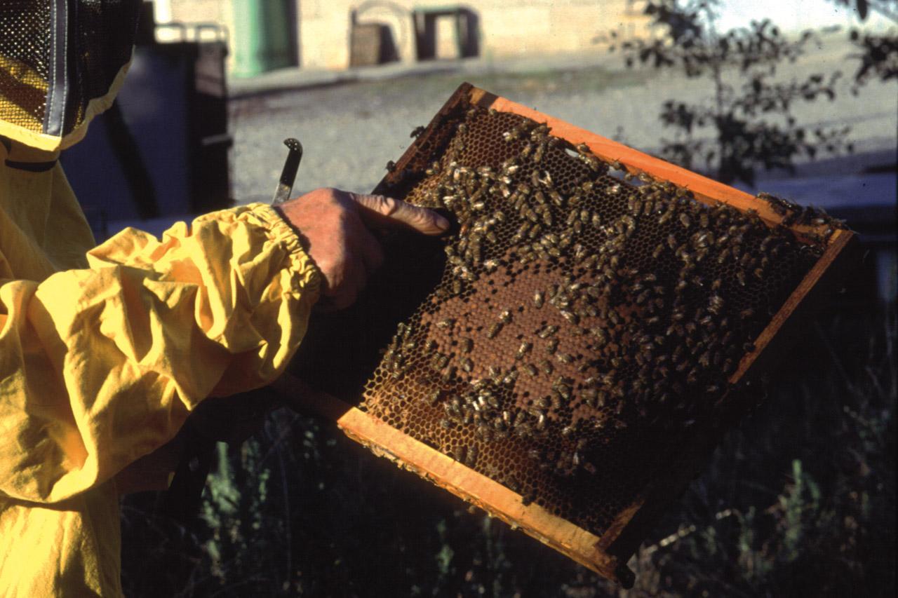 Miele della Lunigiana DOP foto-16