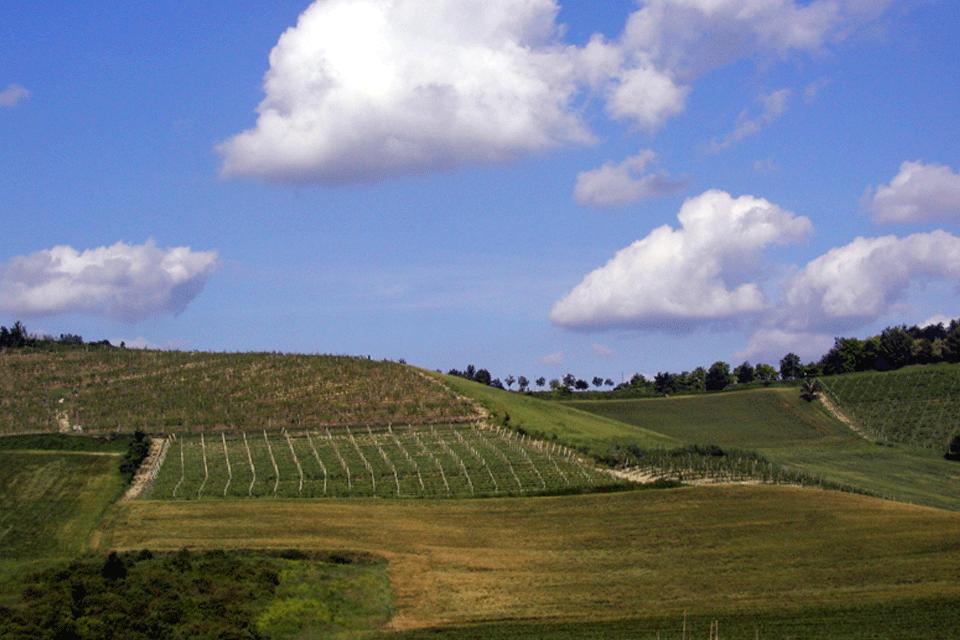 Monferrato DOP foto-1
