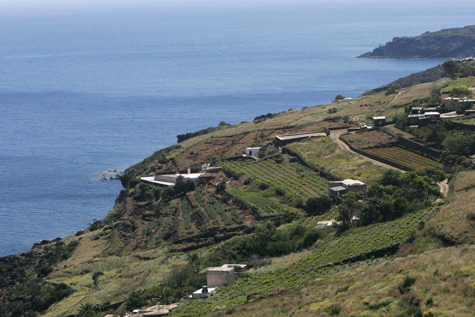 Pantelleria DOP foto-1