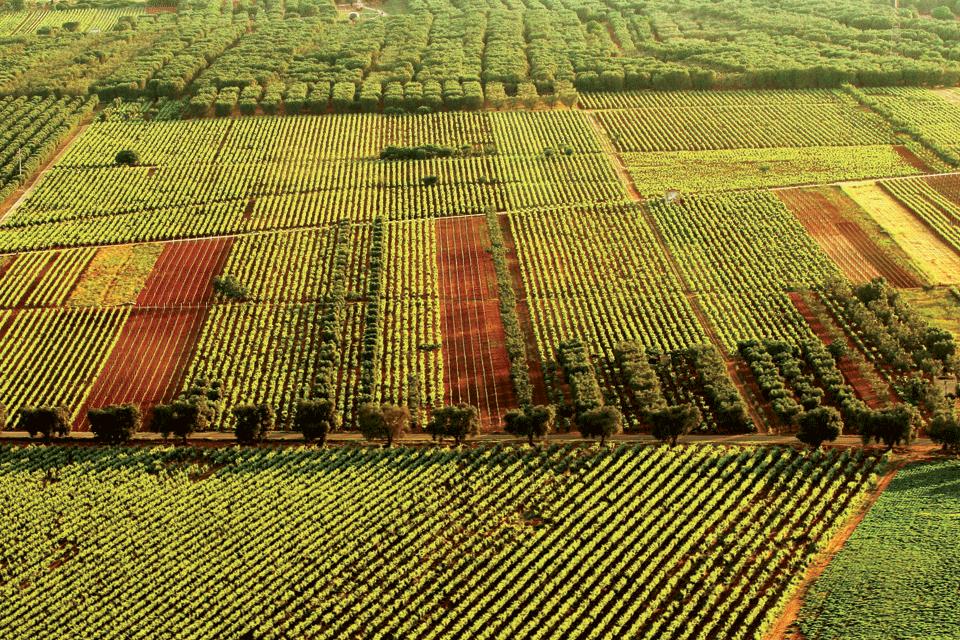 Negroamaro di Terra d'Otranto DOP foto-1
