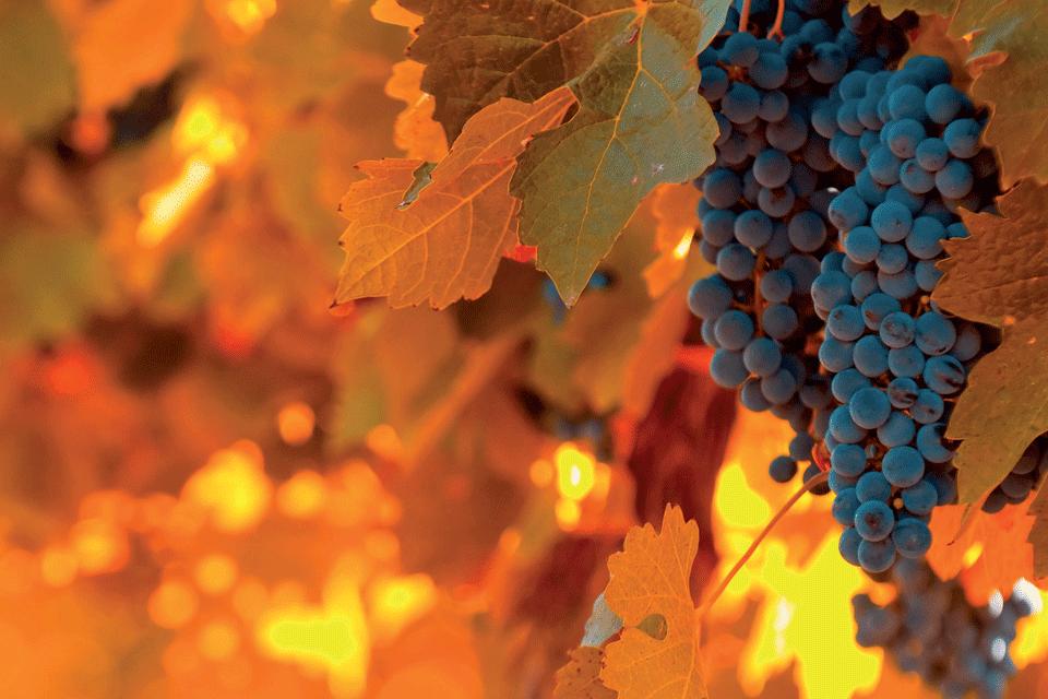 Oltrepò Pavese Pinot grigio DOP foto-1