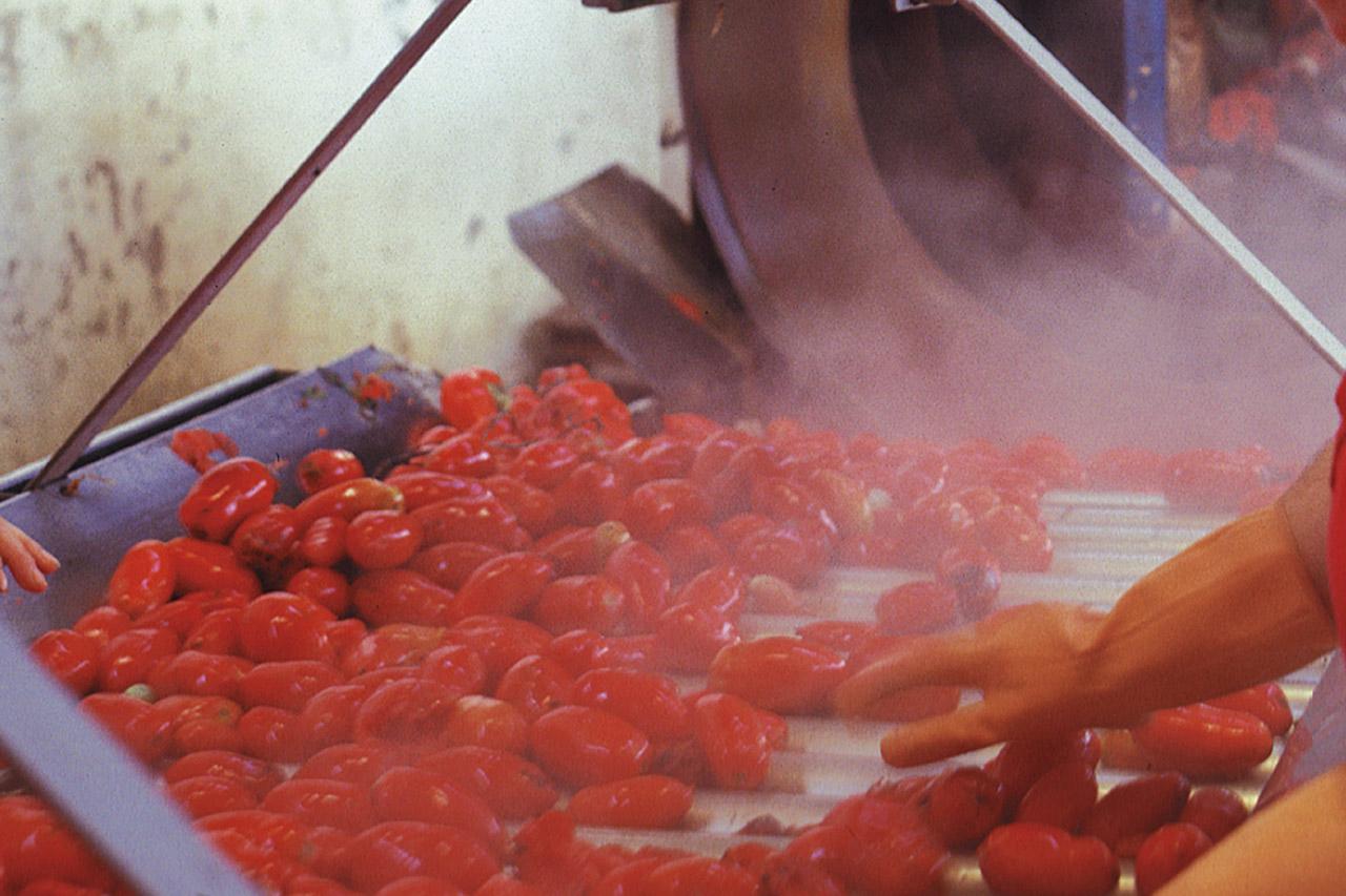 Pomodoro San Marzano dell'Agro Sarnese-Nocerino DOP foto-5