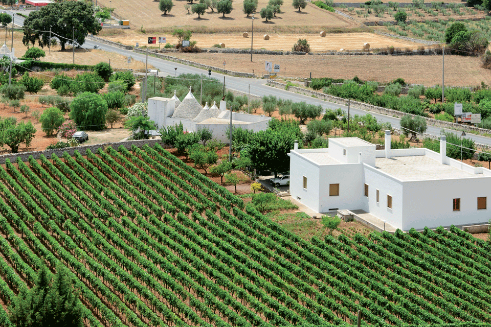 Puglia IGP foto-1