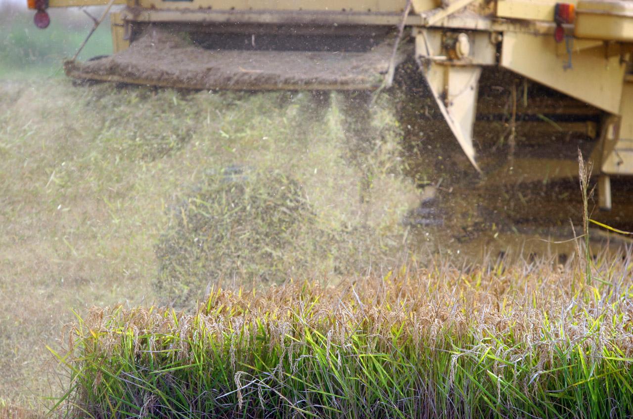 Riso di Baraggia Biellese e Vercellese DOP foto-4
