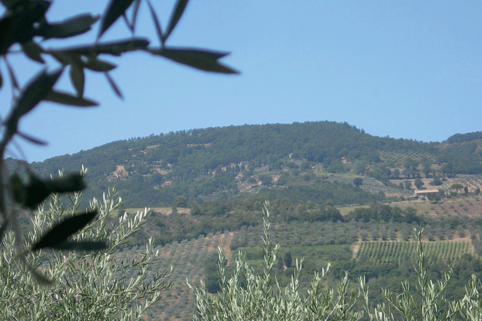 Rosso Orvietano DOP foto-1
