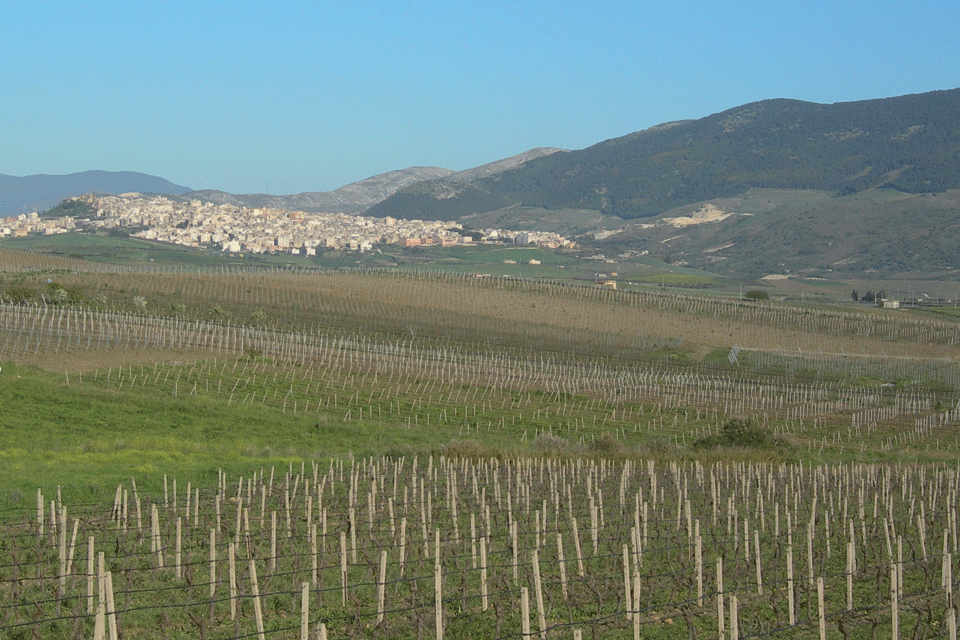 Sambuca di Sicilia DOP foto-1