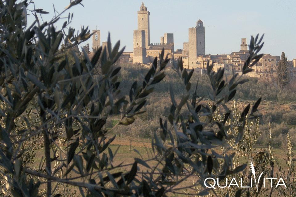 Terre di Siena DOP – Olio EVO foto-1