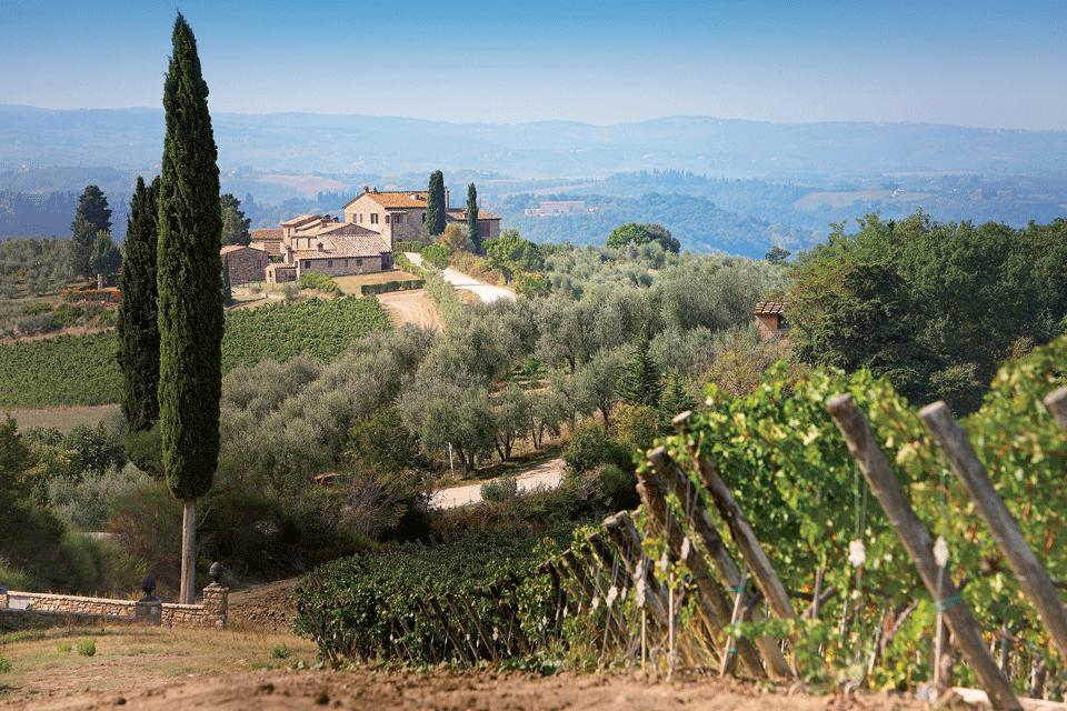 Valdichiana Toscana DOP foto-1