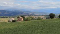 Istat: Verdicchio dei Castelli di Jesi DOP traina la crescita dell