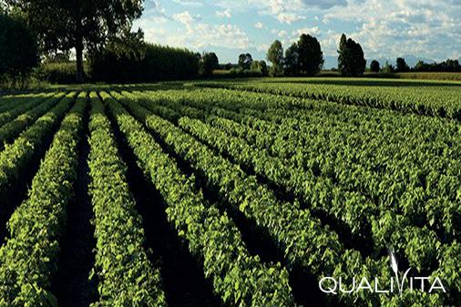 Friuli-Annia DOP foto-1
