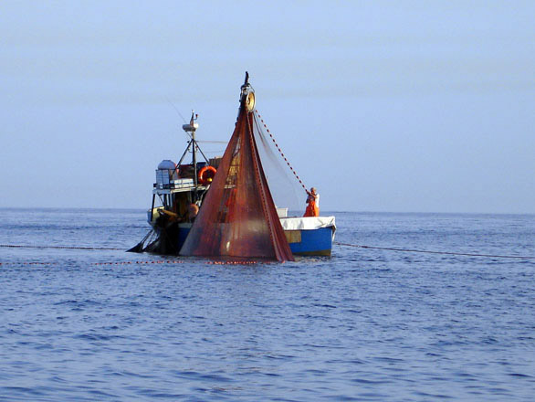 Acciughe Sotto Sale del Mar Ligure IGP foto-12