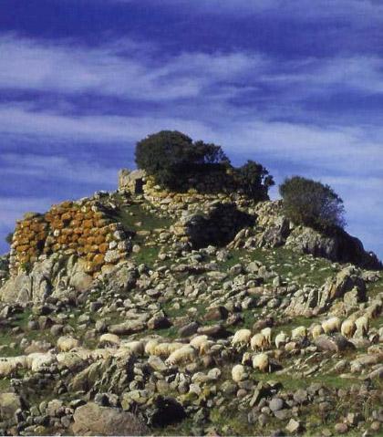 Agnello di Sardegna IGP foto-5