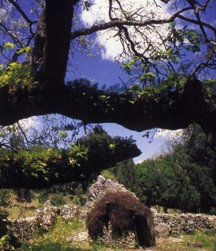 Agnello di Sardegna IGP foto-6