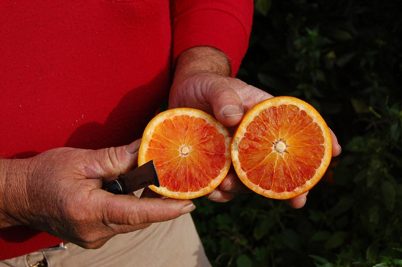 Arancia Rossa di Sicilia IGP foto-15
