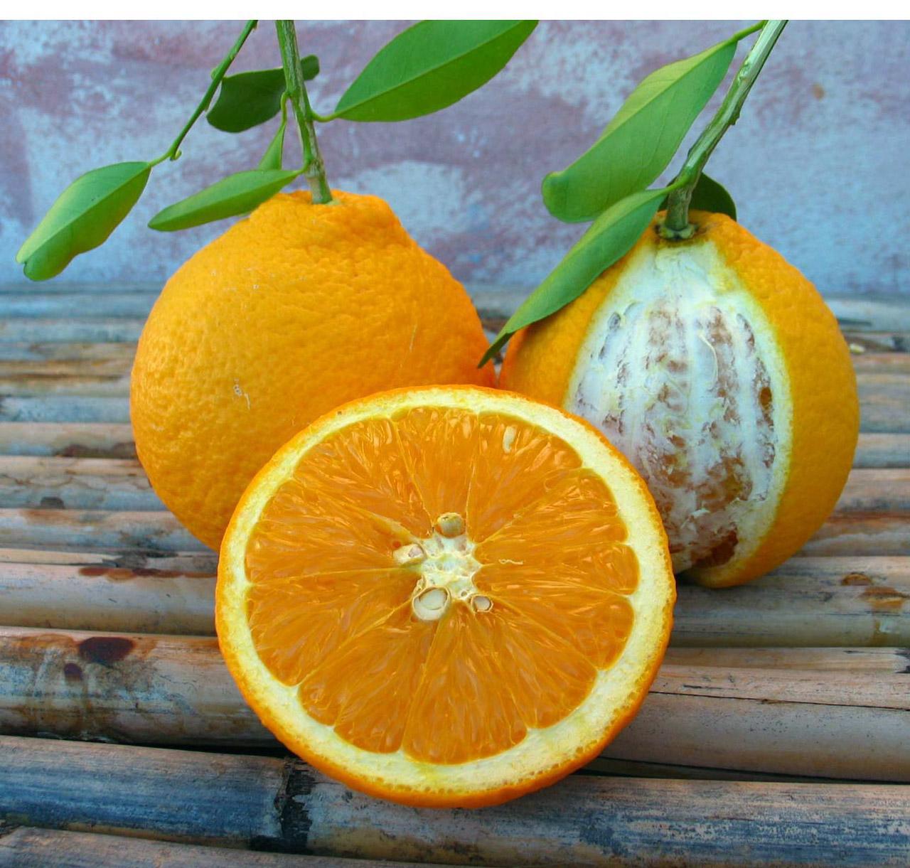 Arancia del Gargano IGP foto-2