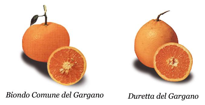 Arancia del Gargano IGP foto-13