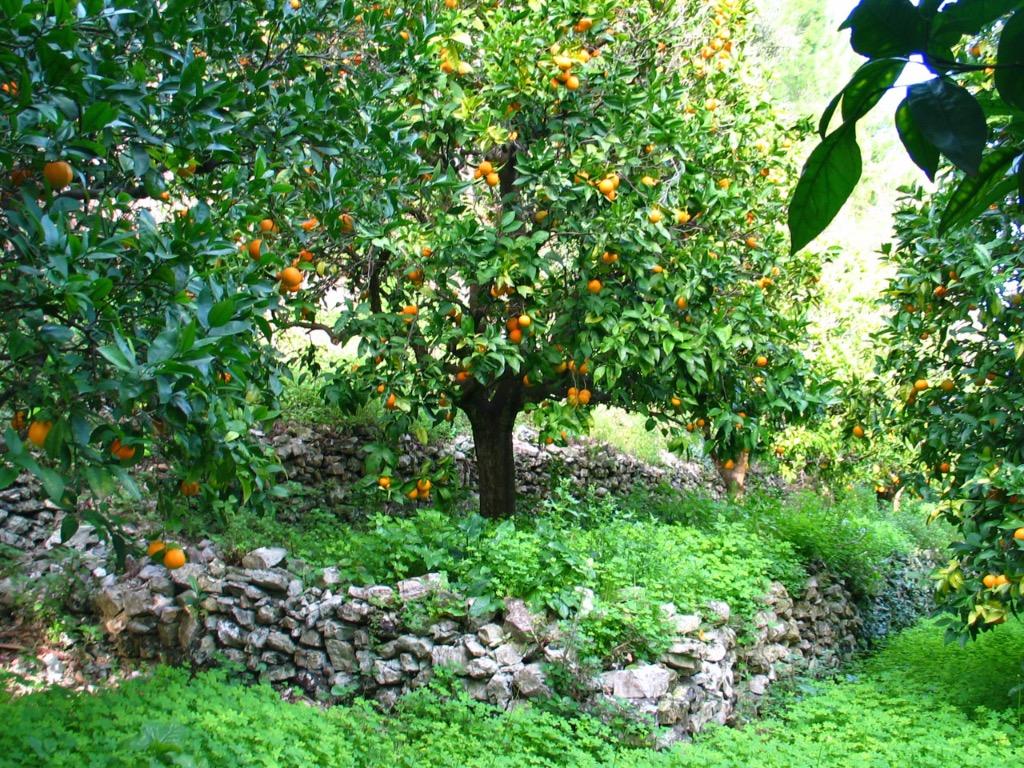 Arancia del Gargano IGP foto-14