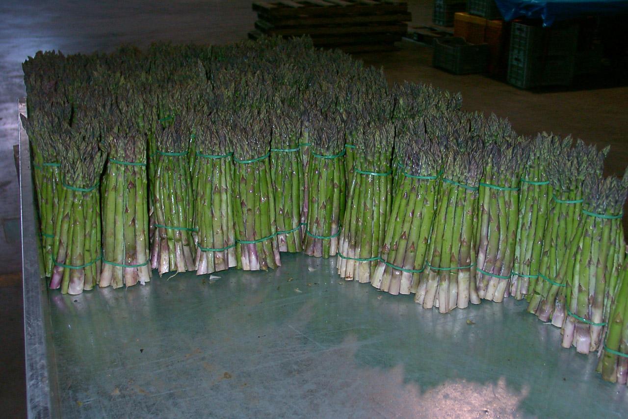 Asparago Verde di Altedo IGP foto-7
