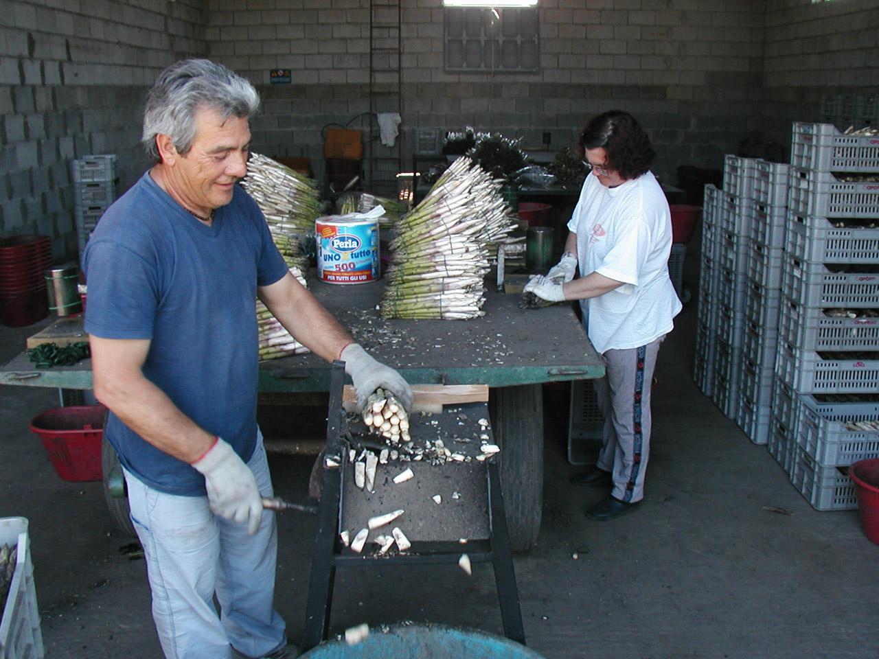 Asparago Verde di Altedo IGP foto-8